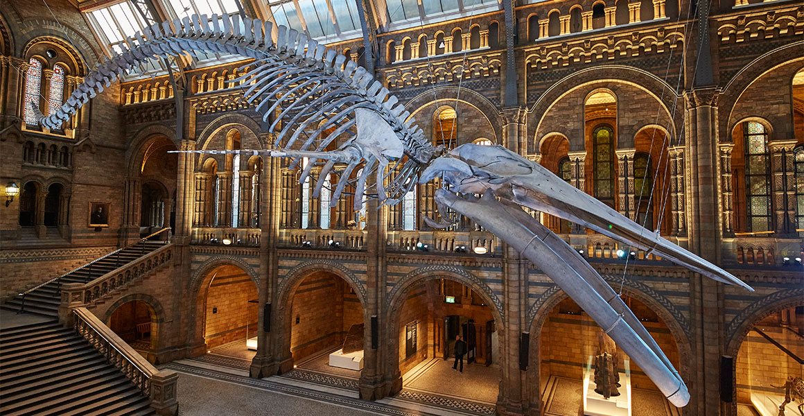 A New 'Hope' for the Natural History Museum
